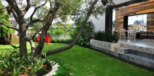 escoger-arbol-jardin1