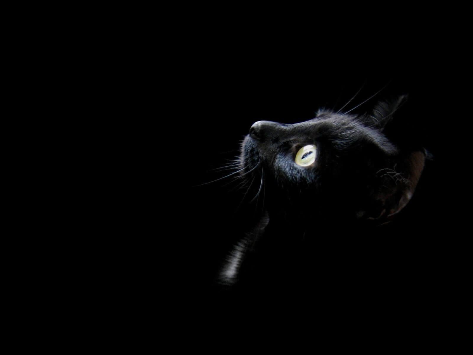 simbolismo del color negro