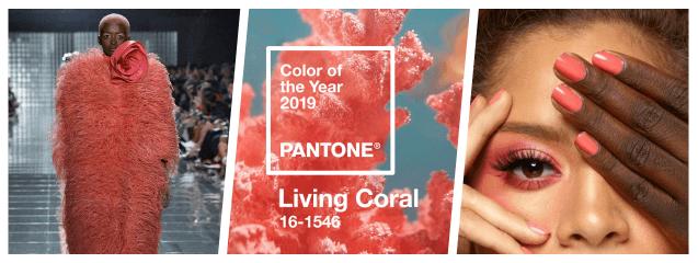 collage coral vivo